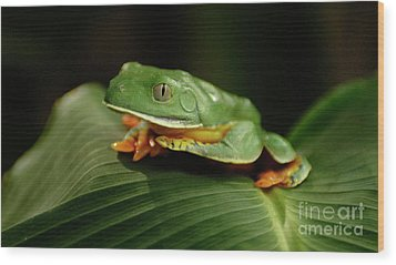 Tree Frog 1 Wood Print by Bob Christopher