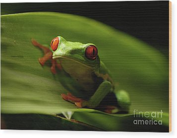 Tree Frog 10 Wood Print by Bob Christopher
