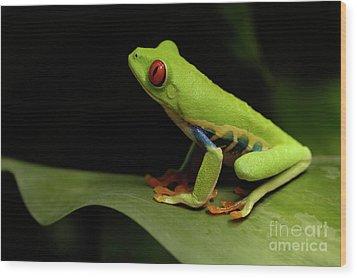 Tree Frog 14 Wood Print by Bob Christopher