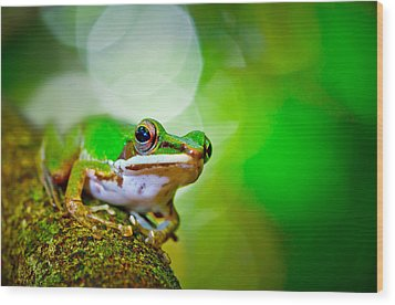 Tree Frog Wood Print by Albert Tan photo