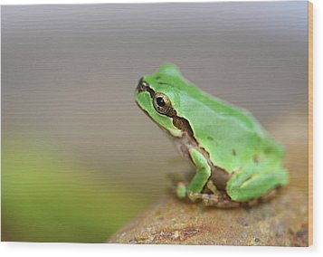 Tree Frog Wood Print by Copyright Crezalyn Nerona Uratsuji