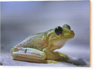 Tree Frog Wood Print by Nick  Shirghio