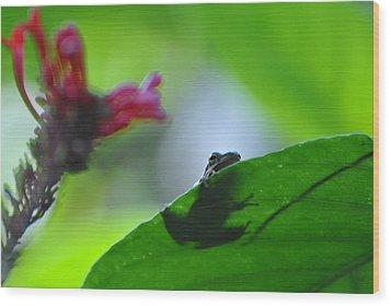 Wood Print featuring the photograph Tree Frog Peeking Over Leaf by Jodi Terracina