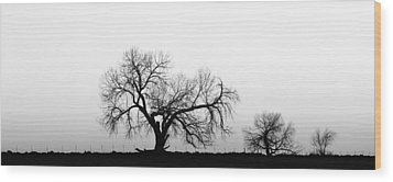 Tree Harmony Black And White Wood Print by James BO  Insogna