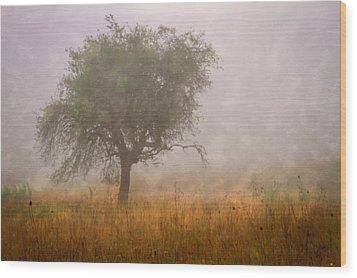 Tree In Fog Wood Print by Debra and Dave Vanderlaan