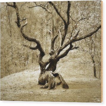 Tree In The Forest Wood Print by Susan Leggett