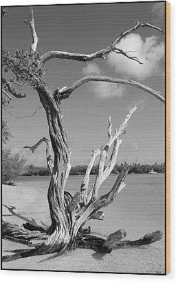 Tree In Tobago Wood Print by Julie VanDore