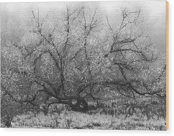 Tree Of Enchantment Wood Print by Debra and Dave Vanderlaan
