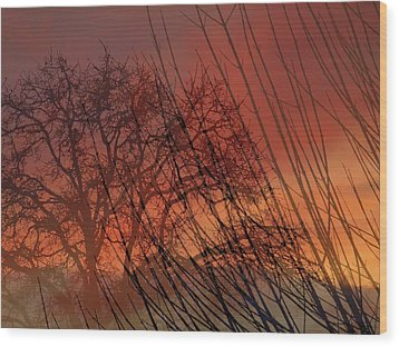 Tree Of Life Sunset Wood Print by Cindy Wright