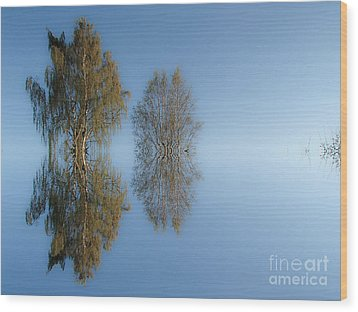 Tree Reflection In Vaerebrovej Wood Print by Michael Canning