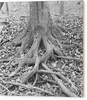 Tree Roots And Leaves Wood Print by Holden Richards