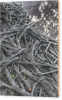 Tree Roots Wood Print by Natthawut Punyosaeng