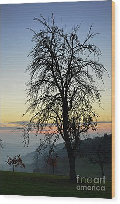 Tree Silhouette At Sunset 2 Wood Print by Bruno Santoro