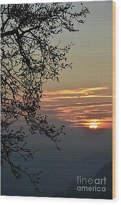 Tree Silhouette At Sunset Wood Print by Bruno Santoro