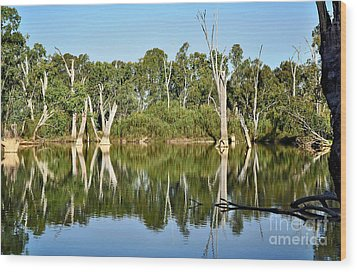 Tree Stumps In The River Wood Print by Kaye Menner