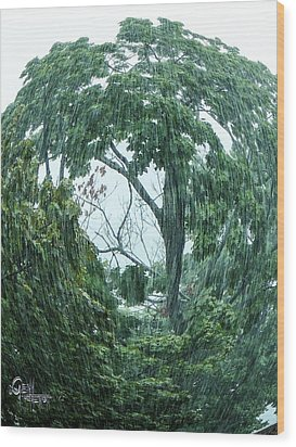 Wood Print featuring the photograph Tree Swirl Downpour by Glenn Feron