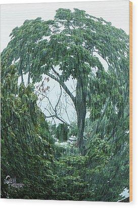 Tree Swirl Downpour Wood Print