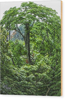 Wood Print featuring the photograph Tree Swirl by Glenn Feron