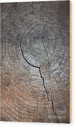 Tree Trunk Wood Print by Carlos Caetano
