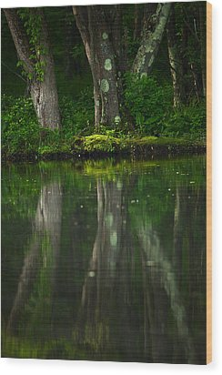 Tree Trunks Wood Print by Karol Livote