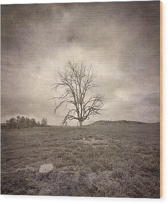 Tree Under The Rain Wood Print by Guido Montanes Castillo