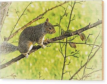 Tree Visitor Wood Print by Karol Livote