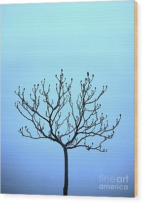 Tree With The Blues Wood Print by Chris Dutton
