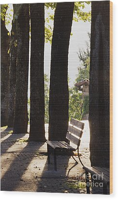Trees And Bench Wood Print by Jeremy Woodhouse