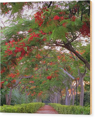 Trees And Flower In Autumn Start Wood Print by Zoh Beny