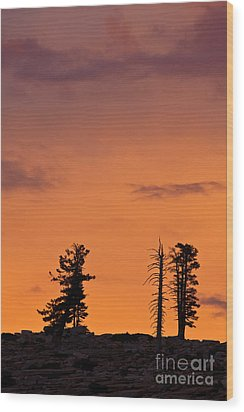 Trees At Sunset Wood Print