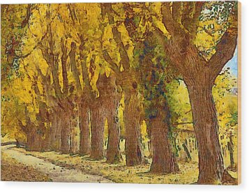 Trees In Fall - Brown And Golden Wood Print by Matthias Hauser