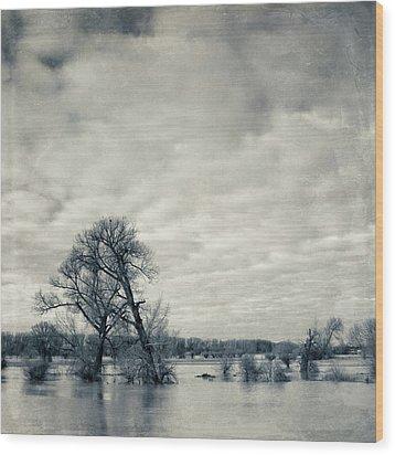Trees In River Rhine Wood Print by Dirk Wüstenhagen Imagery