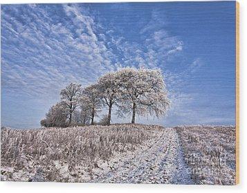 Trees In The Snow Wood Print by John Farnan