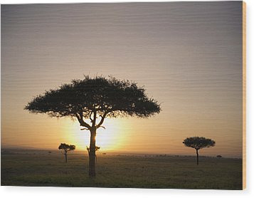 Trees On The Savannah With The Sun Wood Print by David DuChemin