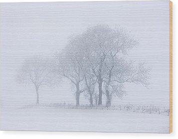 Trees Seen Through Winter Whiteout Wood Print by John Short