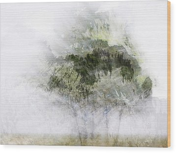 Trees Within Trees Wood Print by Carol Leigh