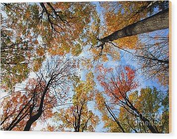 Treetops Wood Print by Elena Elisseeva