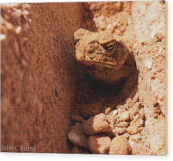 Wood Print featuring the photograph Trenched Frog by John Burns