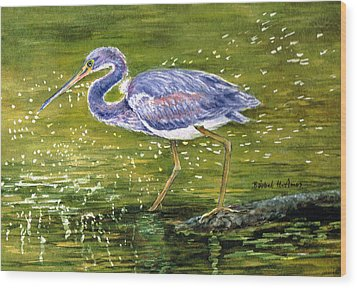 Tri Colored Heron Wood Print