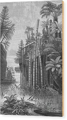 Triassic Period Wood Print by Science Source