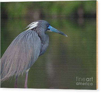 Tricolored Heron Wood Print by Art Whitton