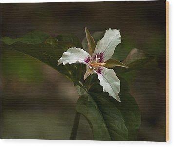 Wood Print featuring the photograph Trillium by Nancy De Flon