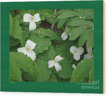 Wood Print featuring the photograph Trilliums-i by Patricia Overmoyer