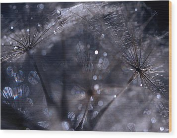 Nature's Trinkets Wood Print by Marion Cullen