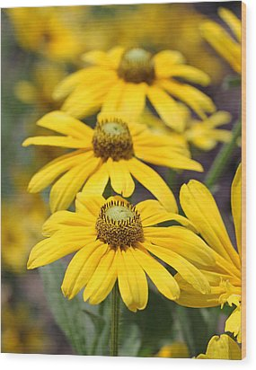 Trio Of Yellow Flowers Wood Print by Becky Lodes