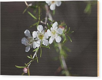 Wood Print featuring the photograph Triple Blossom by Carole Hinding