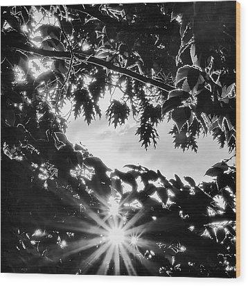 Triple Bluff Wood Print by Nathan Larson