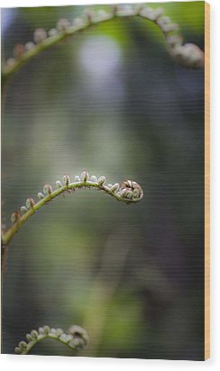 Wood Print featuring the photograph Triple Frond by Carole Hinding