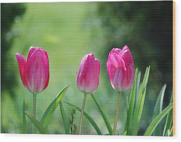 Triple Tulips Wood Print