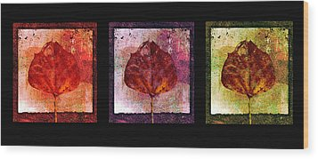 Triptych Leaves  Wood Print by Ann Powell